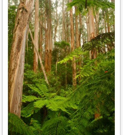 Tarra-Bulga National Park Sticker
