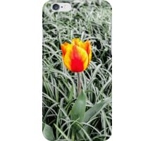 Dutch Tulips part 10 iPhone Case/Skin