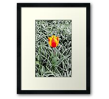 Dutch Tulips part 10 Framed Print