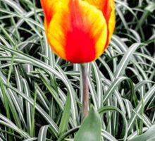 Dutch Tulips part 10 Sticker