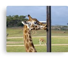 Funny Giraffe, The Long Lingering Kiss Canvas Print