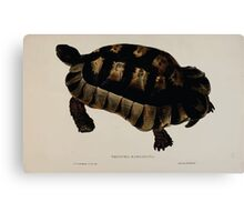 Tortoises terrapins and turtles drawn from life by James de Carle Sowerby and Edward Lear 032 Canvas Print