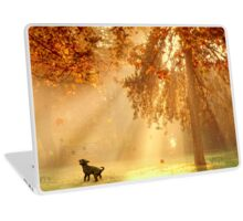 Chasing sunbeams Laptop Skin