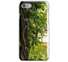 Autumn in Seville  iPhone Case/Skin