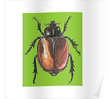 Insect drawing Poster