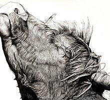 Highland Bull by Maciej Skrzynski