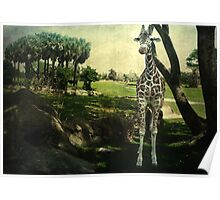 I Thought You Always Wanted To Be a Giraffe Poster