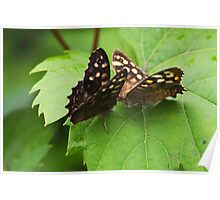 Butterfly Kisses - Speckled Wood Butterflies Poster