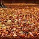 Autumn carpet by Tigersoul