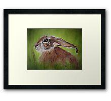 March Hare II - Big Ears Framed Print