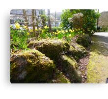 Spring Moss and Daffodils Canvas Print