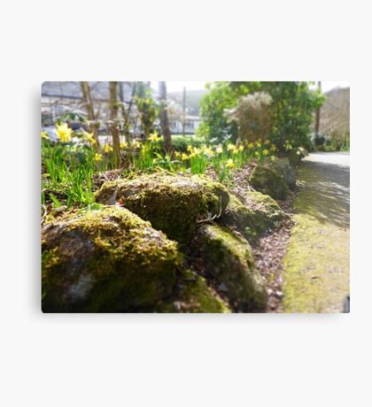 Spring Moss and Daffodils Metal Print