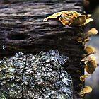 Fungi on a fallen log by myraj