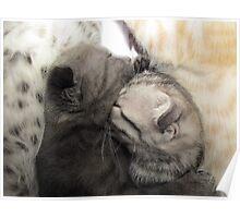Cute cat kittens Poster