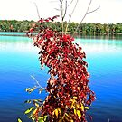 Red leaves and Blue River by Shulie1