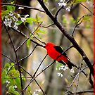 Scarlet Tanager Bird in the Cherry Tree by TrendleEllwood
