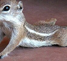 """Yoga Chipmunk"" Sticker"