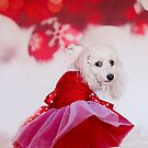 Merry Poodle Christmas by Bevlea Ross