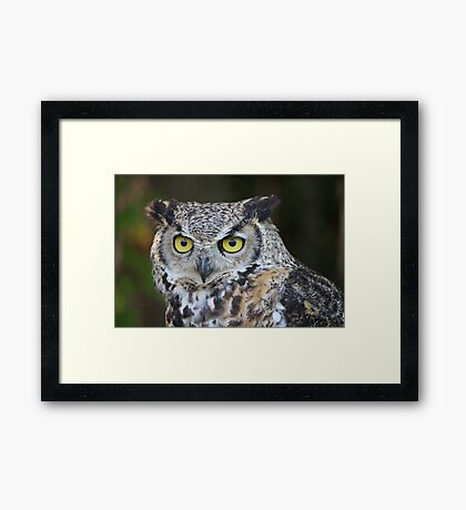 The look of wisdom Framed Print