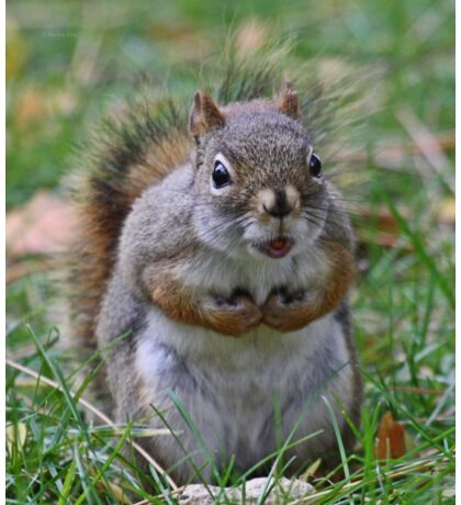 This is my nut Sticker