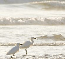 surf fishing by Karol Franks