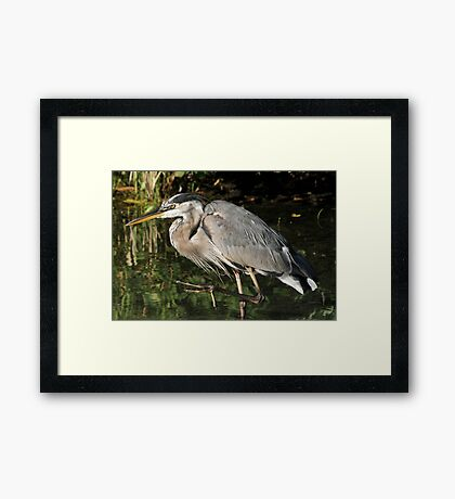 March of the heron Framed Print