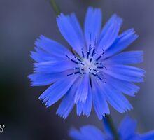 Into the blues by Iris Mackenzie