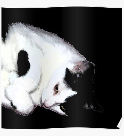 Milo, the cute cat Poster