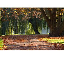 colourful autumn Photographic Print