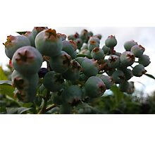 flowers vegetable spring garden Photographic Print