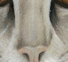 Kitty Cat Close-up Sticker