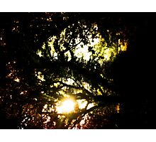Where the Fairies Dwell Photographic Print