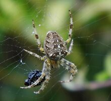Spider with its Dinner by LoneAngel