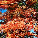 Red Maple Tree by Shulie1