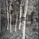 Aspen Eye by Gregory Collins
