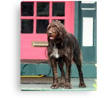 Shag Dog Blues Canvas Print