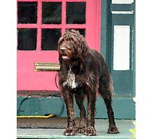 Shag Dog Blues Photographic Print