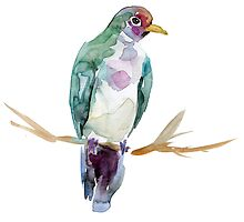 Fruit dove watercolor painting by Zendrawing