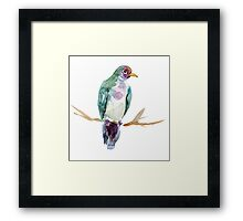Fruit dove watercolor painting Framed Print
