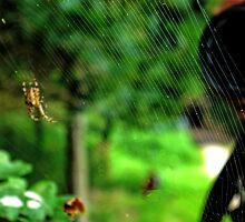 Spider Woman.... by lynn carter