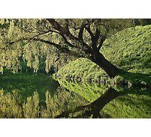 Tree reflection Photographic Print