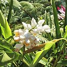 Alpinia malaccensis - Ginger plant by Margaret Stevens