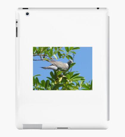 Pigeon iPad Case/Skin