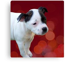 Staffordshire Bull Terrier, Black And White Puppy. Canvas Print
