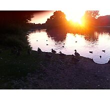 Duck Gathering  Photographic Print