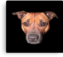 Staffordshire Bull Terrier, Face Of An Angel. Canvas Print