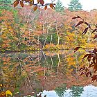 Reflection on an Autumn Pond by John Butler