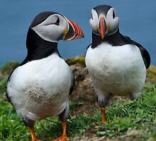 Puffins on Lunga 2015 Calendar by tmtht