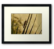 Wild Grashopper on Palm Leaves - Macro/Nature Photography Framed Print