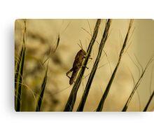 Wild Grashopper on Palm Leaves - Macro/Nature Photography Canvas Print